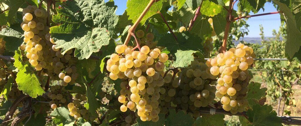 NY Grape & Wine Classifieds